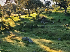 Carcaboso - Hostal Asturias