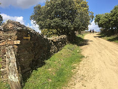 Etappe Cañaveal - Riolobos