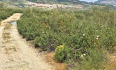 Via de la Plata bei Cañaveral