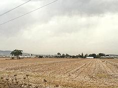 Agrowüste Baumwollfeld