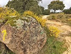 Gelber Pfeil auf altem Stein