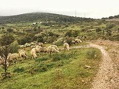 Etappe von Valdesalor nach Cáceres