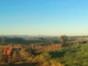 Landschaft bei Carcaboso