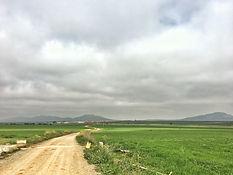 Via de la Plata in Torremejía