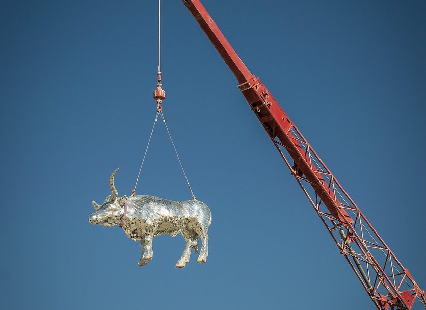 disco cow.jpeg