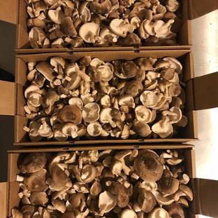 Dunks Mushrooms Danville NH Shiitake Mushrooms NH Farm Connection