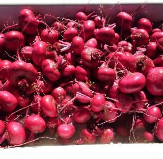 Red Scarlet Turnip - $3.25/lb