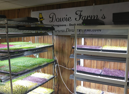 Our New Microgreens Growing Space!