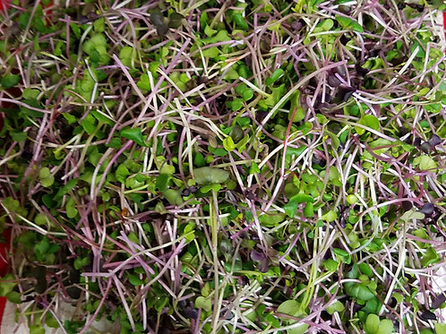 Purple Salad Blend Microgreens