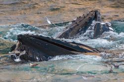 07 -Spitzbergen-5