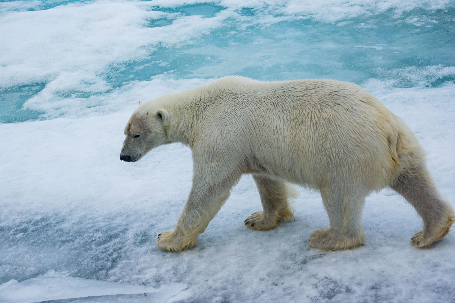 06 -Spitzbergen-3