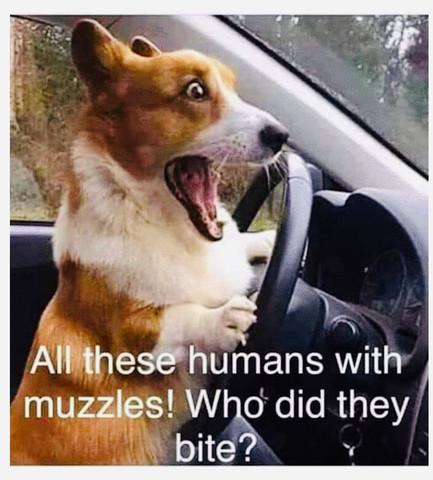...... and the dog said!