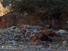 Saturday Feb 1, 2020 - just north of Eilat