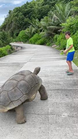 Giant Tortoise, La Digue Island, Seychel