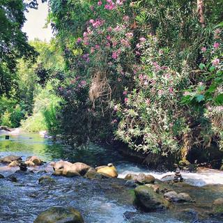 Im Park von Tel Dan startet der Israel National Trail