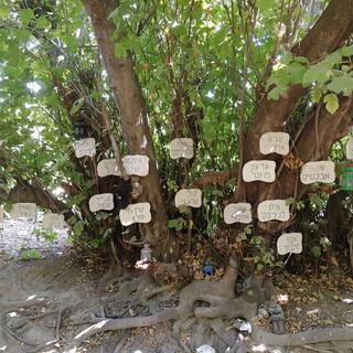 In Erinnerung an die 73 Opfer aus dem Helikopterunglück 1997 wurde beim Kibbutz Dafna eine Gedenkstätte erbaut