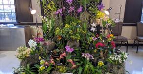 2020 CJOS (NJOS) Orchid Exhibit