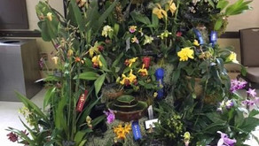 CJOS Exhibit in 2018 NJOS Orchid Show