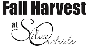 2019 Fall Harvest at Silva Orchids