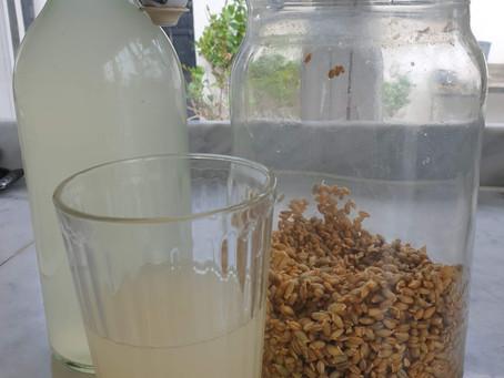 Rejuvelac, en dryck som ger stark och glad mage