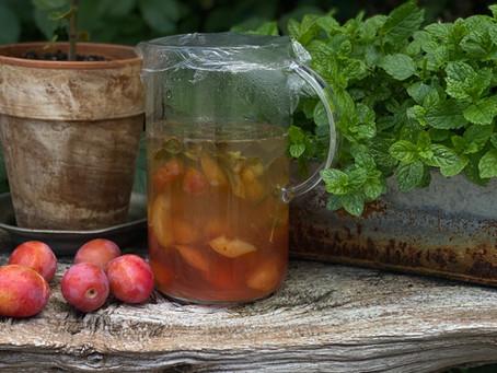 Fermenterad plommondryck med citronmeliss
