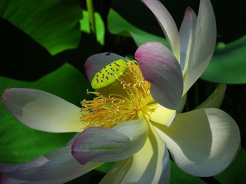 bloom-blossom-close-up-40386.jpg