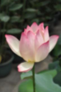 bloom-blossom-flora-68648.jpg