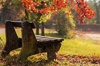 autumn-4828094_1920.jpg