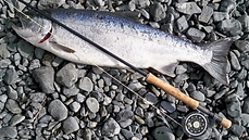 photo-of-gray-fish-caught-by-fishing-rod