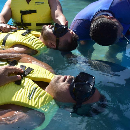 Dolphinaris experience.