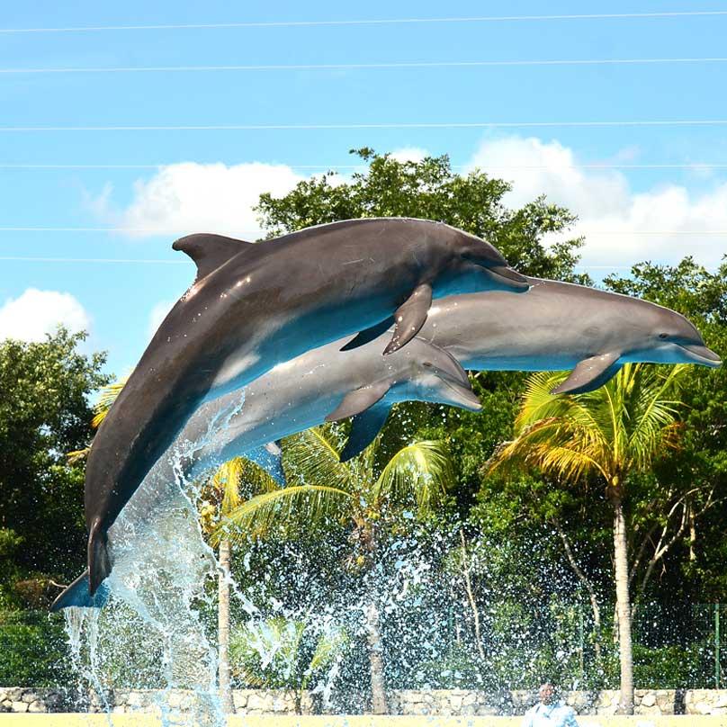 Dolphinaris-Riviera-Maya-Jumping