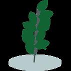 LocustLeaf-icon.png