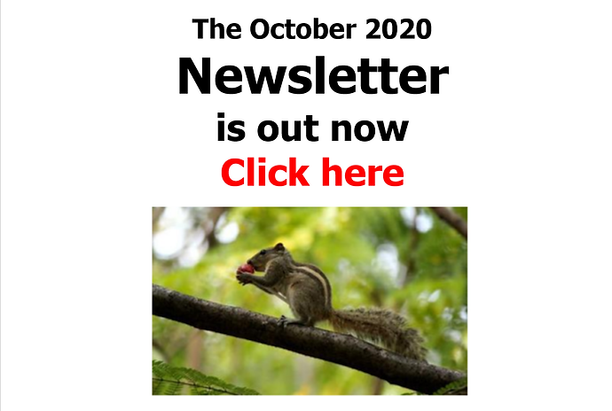 oct newsletter banner.png