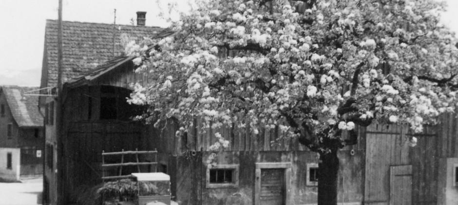 Apfelbaum vor Scheune.jpg