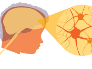How aging impacts the neurological system