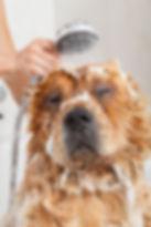 dog grooming, big dog in bath