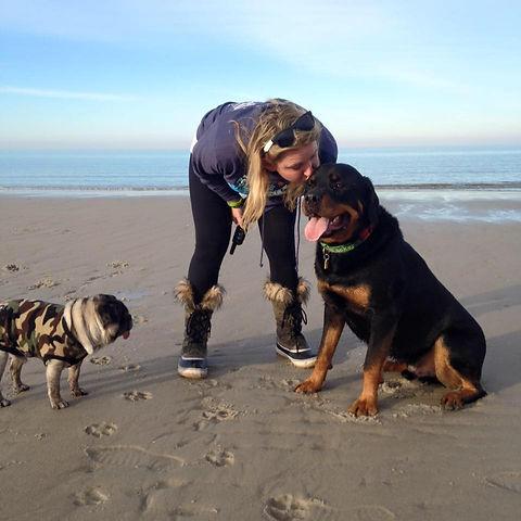 furballs, dogs on beach