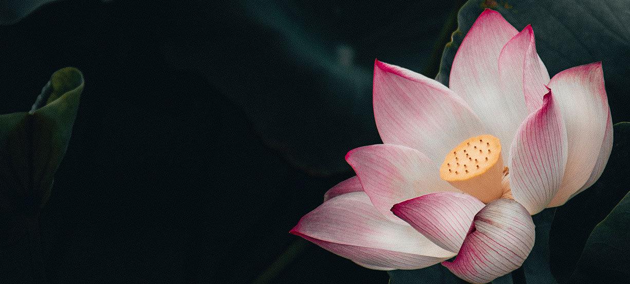 Lotus_Duo-Titelcover_Kontakt_iii.jpg