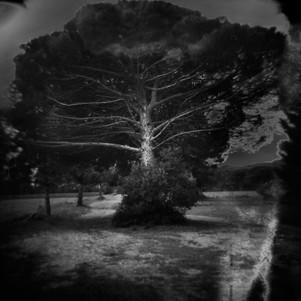 A-tree-2.jpg