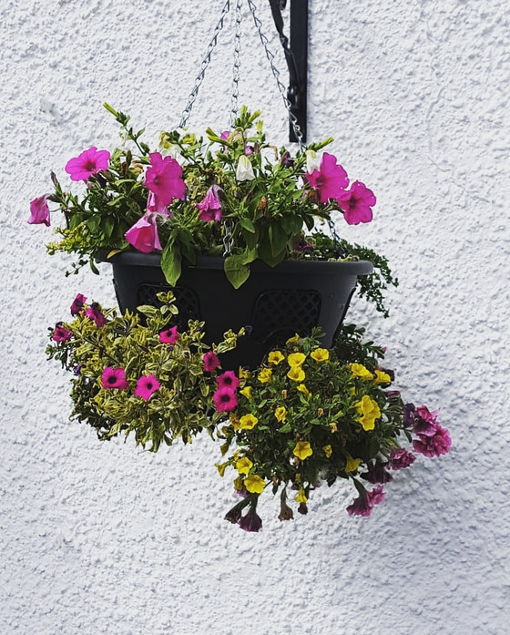 Top tips for getting into Gardening