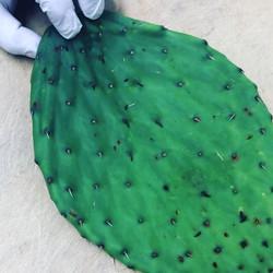 Cactus 🌵so yummy 😋!