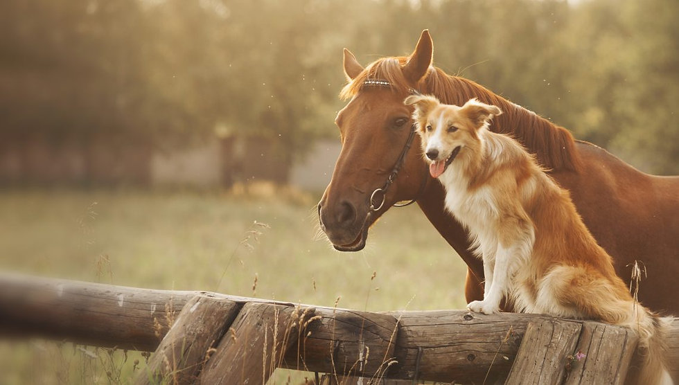 new-hero-dog-horse-5da72e5097b28-1140x647.jpg
