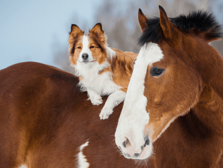 All-Natural, High-Quality Animal Health Products