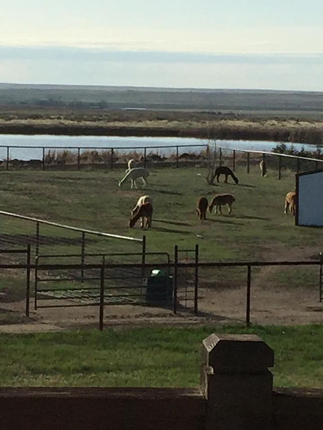 The Fleece Factory of the Rockies - Northern Colorado's premier fiber mill, customized processing, fiber crafting classes, alpaca sales, product development, mill tours