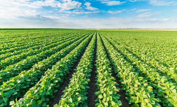 EM-1 Bio Soil Enrichment Products, Soil Quality, Integrated Bio Products
