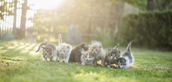 kittens-5da7381d7dd72-1140x548.jpg