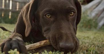 dog health - Goodwinol Products Corp