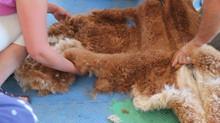Shearing Tips
