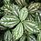 Thumbnail: Génie créateur (plante aluminium)