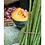 Thumbnail: Inde - Marché jaune